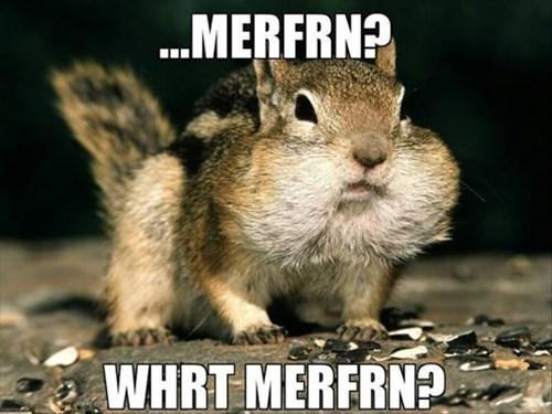 cheeks chipmunks squirrels muffin funny - 7974327552