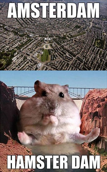 Amsterdam,dam,puns,hamsters