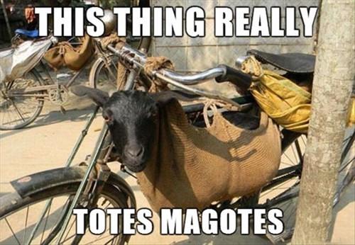 goats,puns,bike,funny