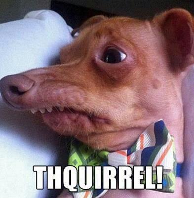 cute squirrels lisp funny - 7974351104