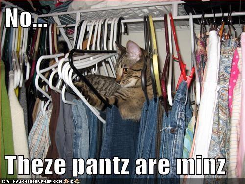 Cats,closet,pants,hangers