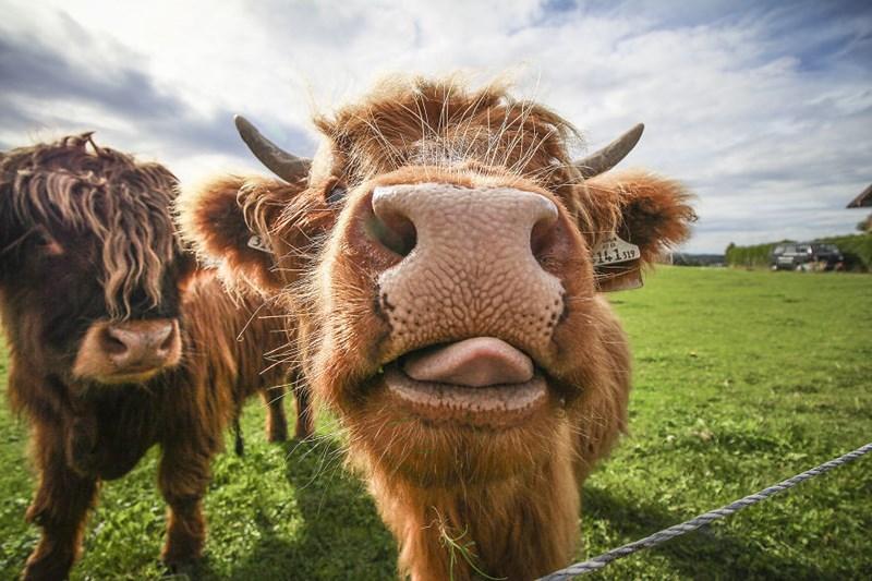 photography instagram portraits mugshots Travel animals - 797445