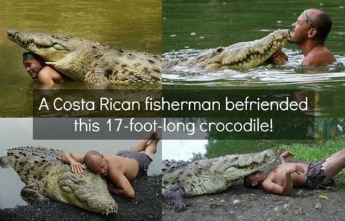 crocodile friendship - 7974729472