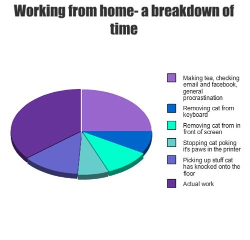 pets working Cats Pie Chart