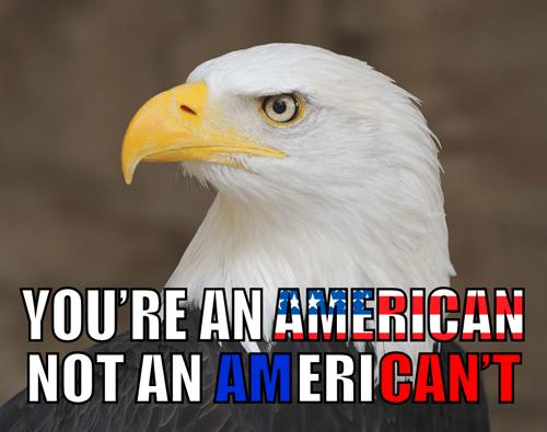 america bald eagle - 7975057920