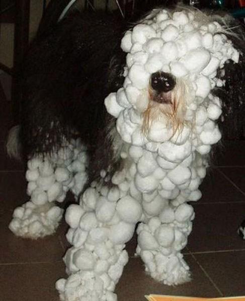 cute cold hotdog snow - 7975096576