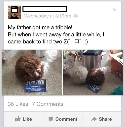 dads,facebook,Star Trek,parents,tribbles,g rated,parenting