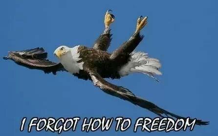 government Congress bald eagle - 7975159552