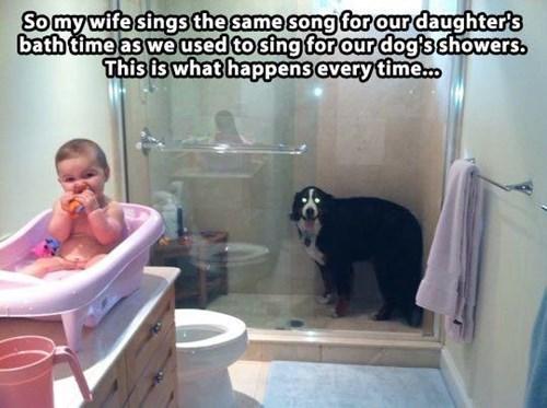 bath cute dogs shower singing - 7975454720