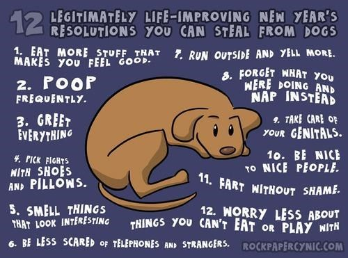 advice dogs new year resolution
