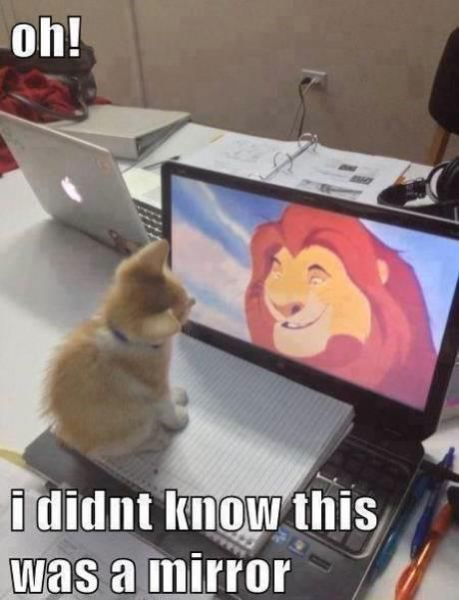 Cats,cute,lion king,laptop,mirror