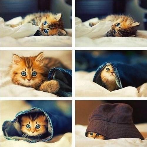 Cats cute hide and seek kitten - 7975472896