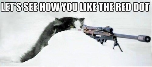 Cats,gun,red dot,kitten,revenge