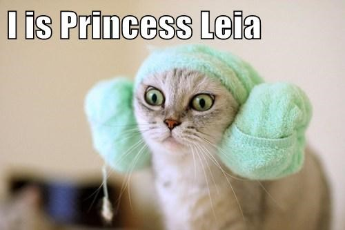 Cats star wars Princess Leia wookie - 7975848448