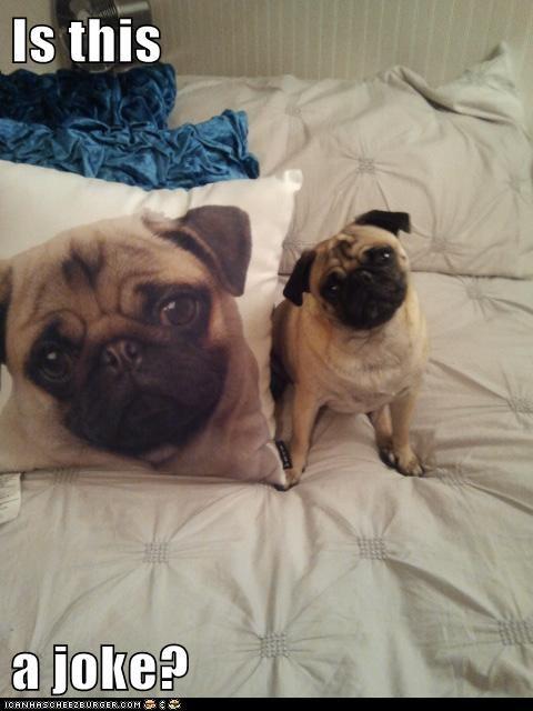 dogs joke Pillow print - 7976504832