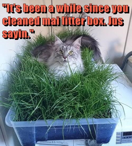 """It's been a while since you cleaned mai litter box. Jus sayin."""