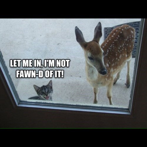 Cats cute deer fawns puns - 7976577280