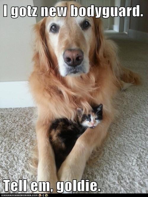 cute bodyguard dogs kitten - 7976611328