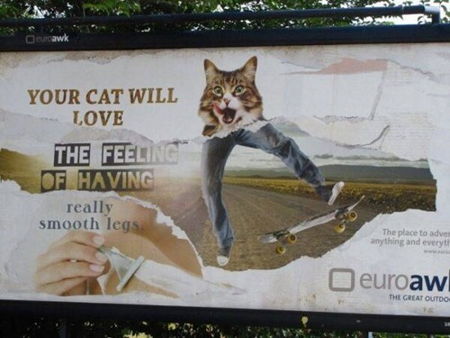 Cats billboard coincidence smooth funny sings