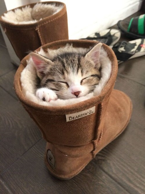 Cats cute bed boots kitten warm - 7976772096