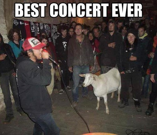 concert,goats,sheep