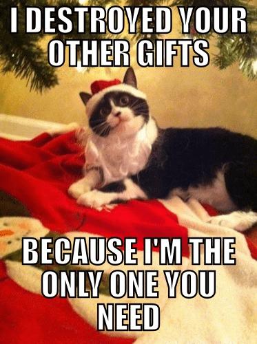 Cats christmas jealous funny - 7976847360