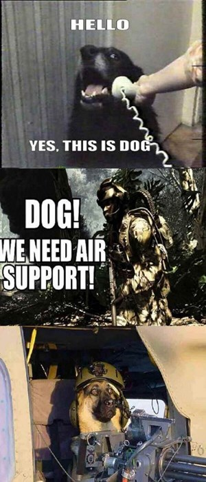 dogs hello funny military