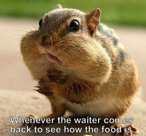chipmunks,bad timing,food,waiter