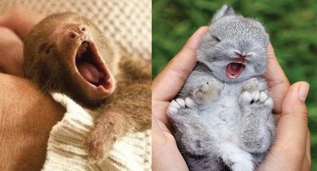 yawning funny photos funny animals animals - 7977221