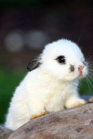 tiny bunny with white fur and a dark spot by its nose