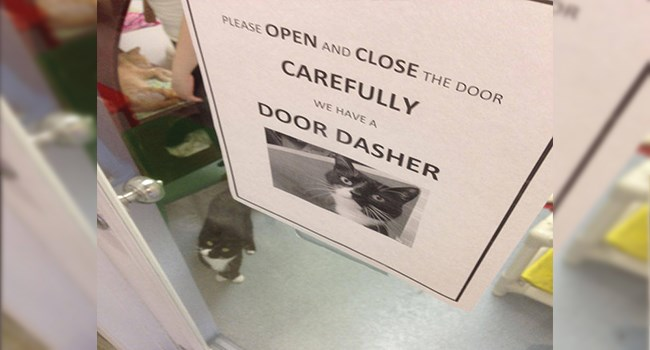 sign asking to be careful when opening the door because a cat tries to run out