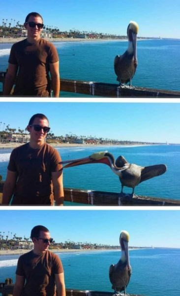 birds,photobomb