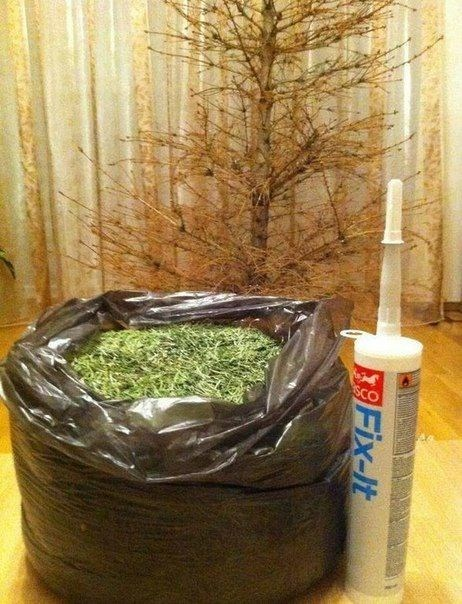 christmas trees there I fixed it g rated