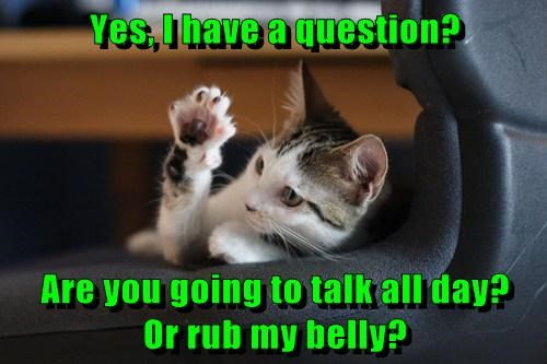 Yes, I have a question?  Are you going to talk all day?      Or rub my belly?