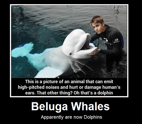 justin beiber,dolphins,beluga,mammals
