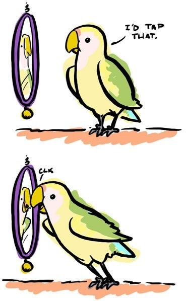 birds,mirrors,silence of the lambs,web comics