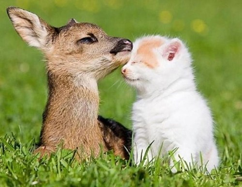 cute friends fawns kitten - 7979280384
