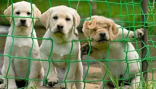 cute dogs escape puppies - 7979303168