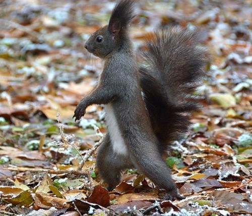 cute walk stroll park squirrels