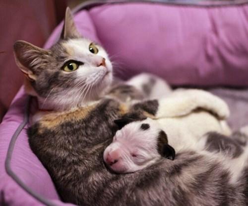 Babies cute snuggle puppies