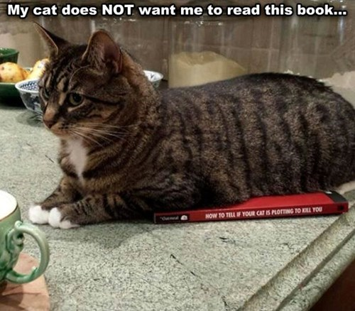 Cats books plot kill read