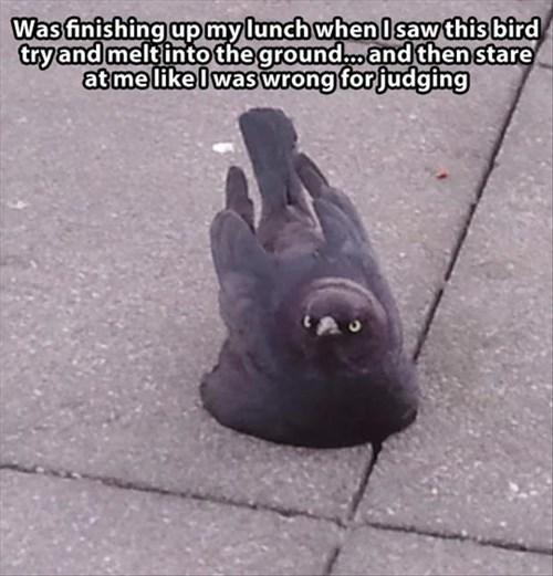 birds judge funny melt