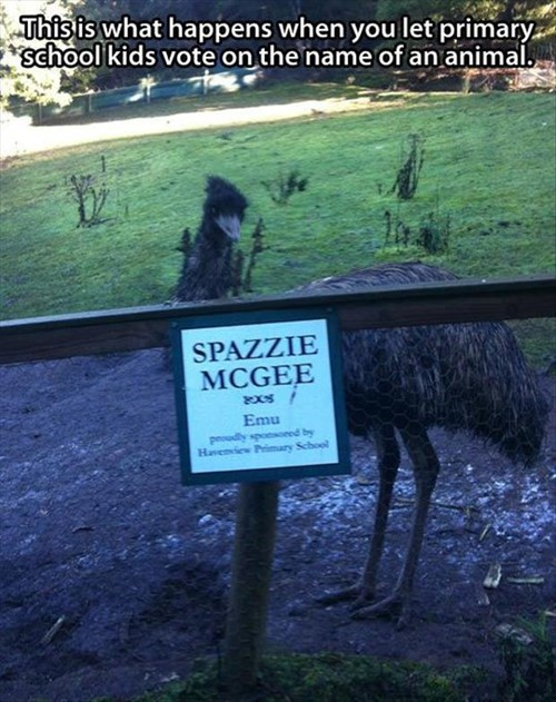 birds emus elementary school funny zoo - 7979358208