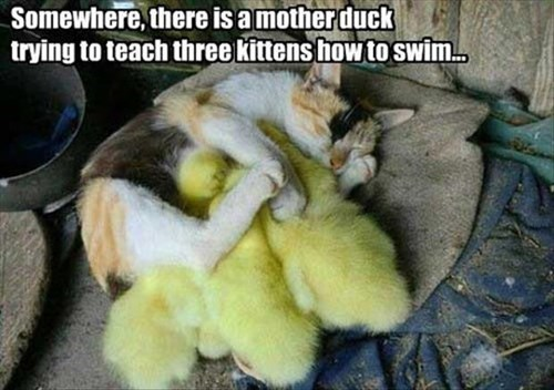 adopt Cats cute ducklings - 7979364096