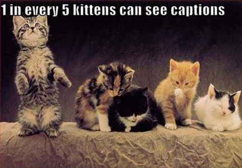 Cats cute captions kitten - 7979383296