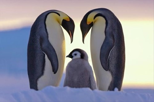 Babies,family,penguins,love