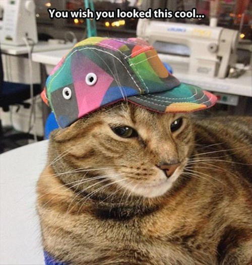 Cat - You wish you looked this cool...