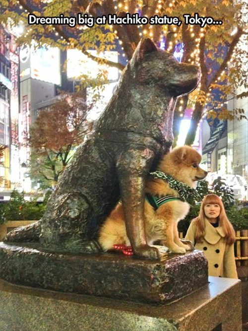 cute dogs inspiration statue