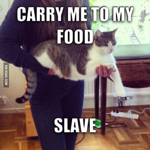 Cats,food,carry,slave