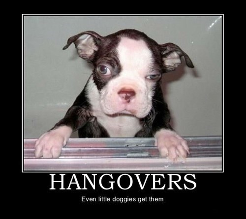 dogs funny Party hangover new years eve